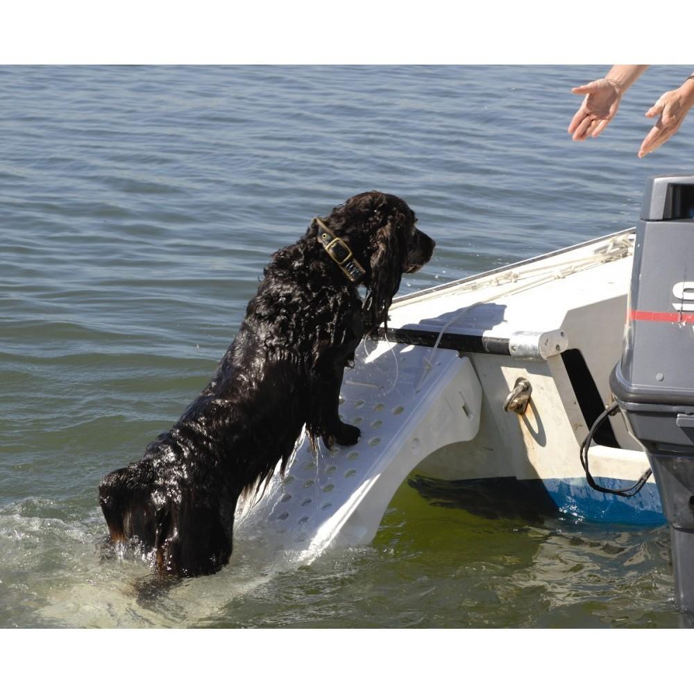 accessoire piscine pour chien