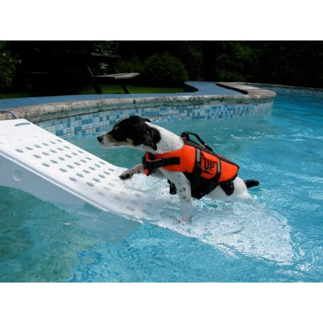 alarme piscine chien
