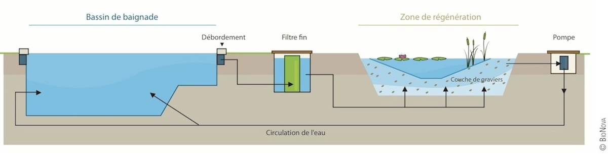 filtration piscine ecologique